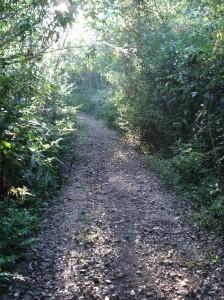 que ao longo de +- 6km ia se transformando em uma trilha mais fechada